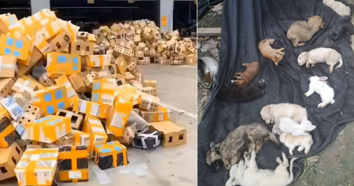 5000 Pet Animals Found Dead After Being Stuffed In Boxes At Chinese Shipping Facility