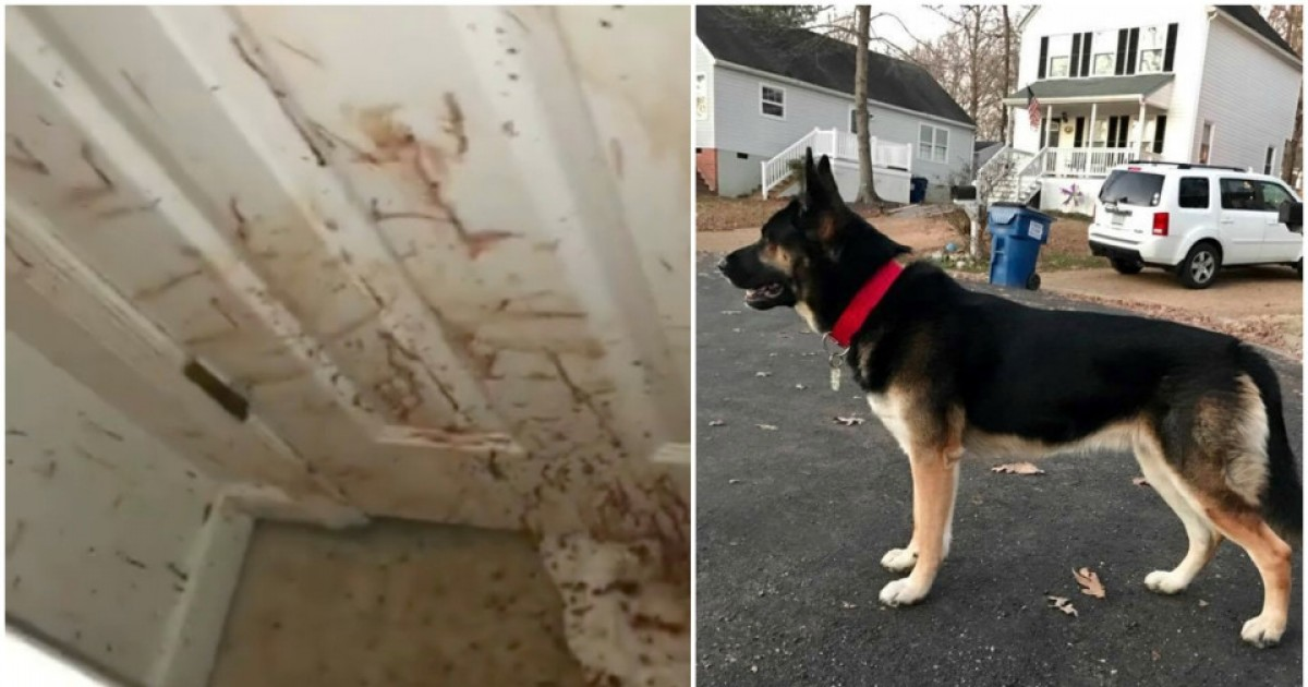 Family Shocked After Returning To A Bloodstained House