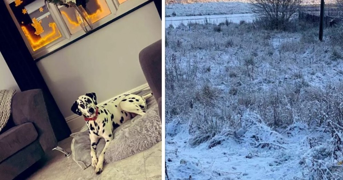 The Guy From Glasgow Dares Twitter Users To Discover Dalmatian Having A Poo In Snow