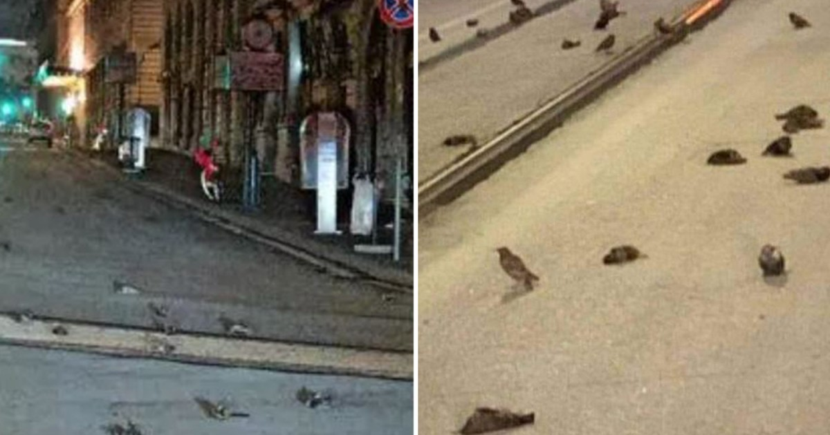 Hundreds Of Birds Drop Dead In Rome Due To New Year Eve's Fireworks