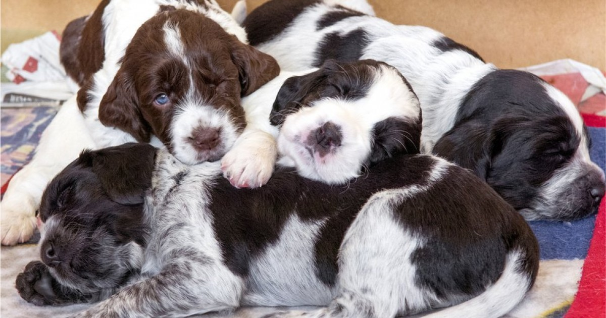 Hundreds Of Puppies Bought During COVID-19 Pandmeic Lockdown Are Now Being Rehomed