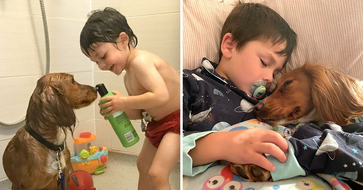 4-Year-Old Autistic Boy Learns To Communicate With The Help Of His Dog
