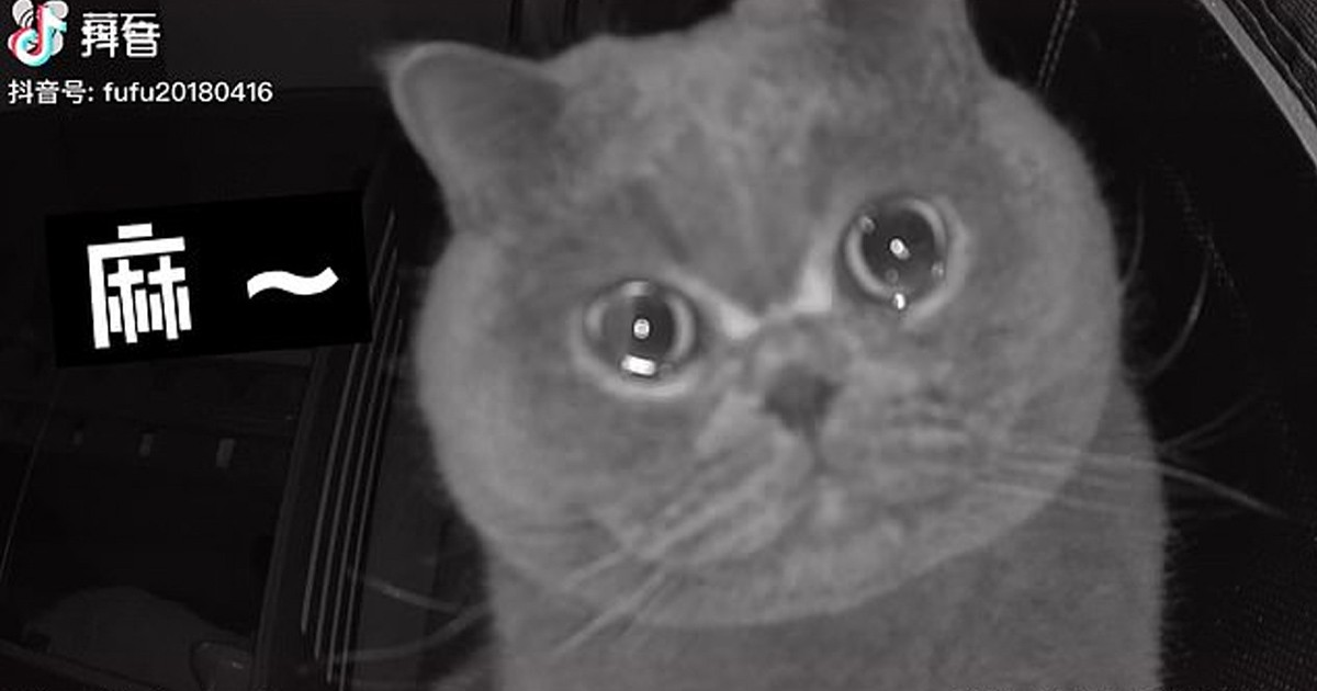 Heartbreaking Video Shows Cat Crying Into Security Camera After Being Left Behind For The Holidays