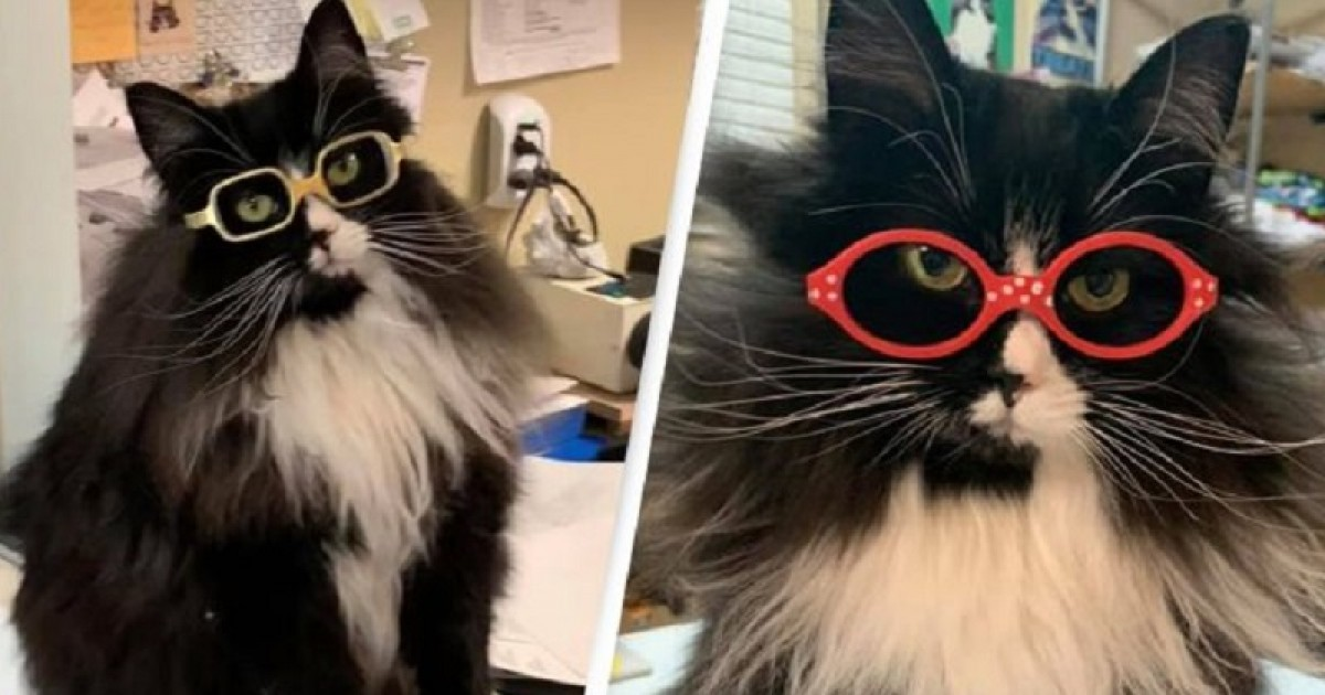 One Optician Hired A Kitty To Make Kids Feel Less Lonely While Getting Glasses