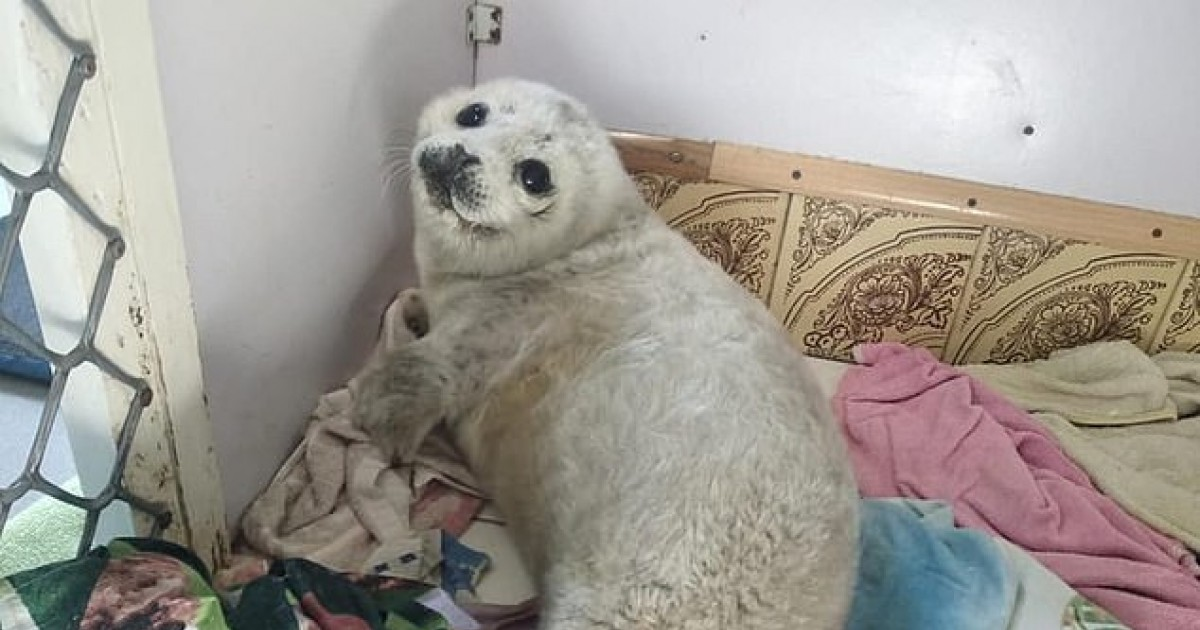 A Baby Seal Died From Stress After Crowds Of People Gather To Photograph It On A Russian Beach
