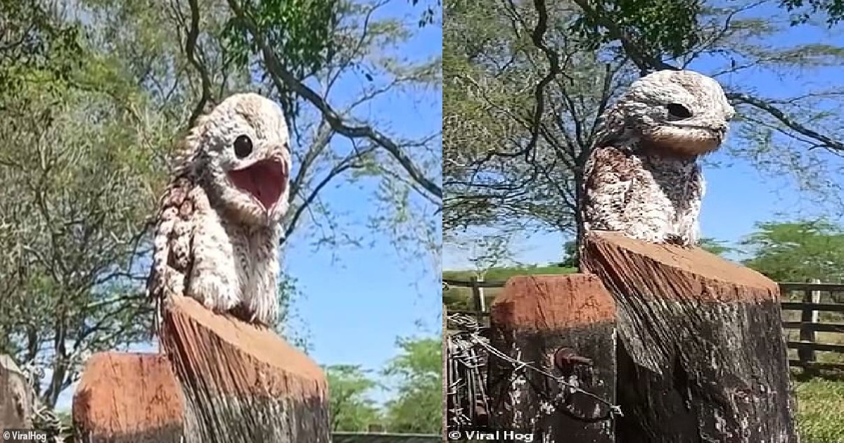 Woman Gets Scared From A Ghost Bird Perched On Fence In Columbia