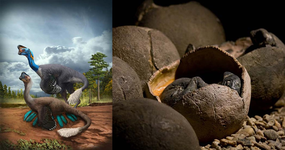 Jurassic Park 2.0? Archaeologists Made Massive New Discovery Of Dinosaur Embryos In China