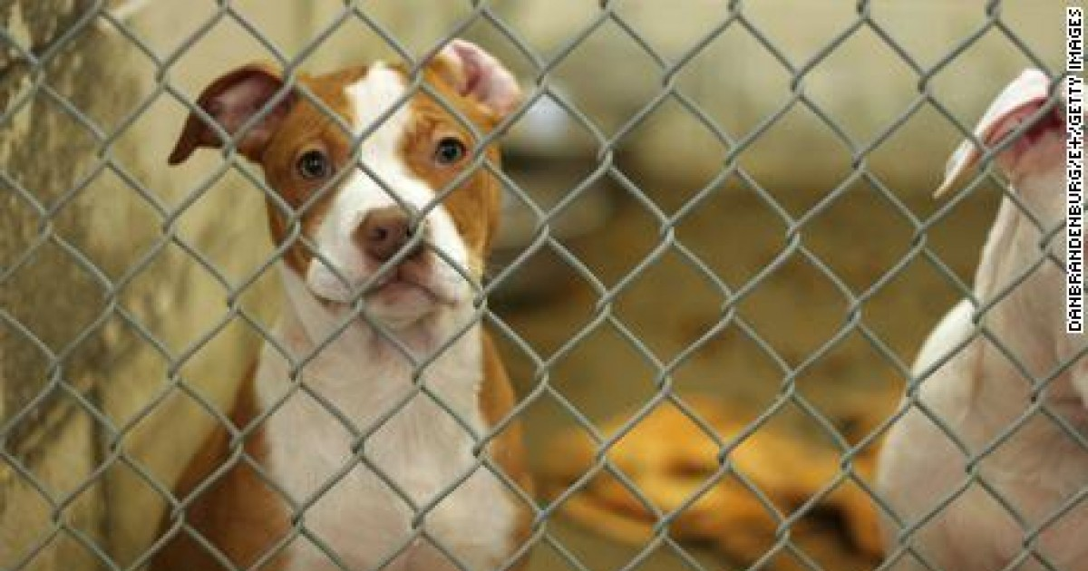 US City Los Angeles Officially Recognized As a 'No-Kill' City for Animal Shelters