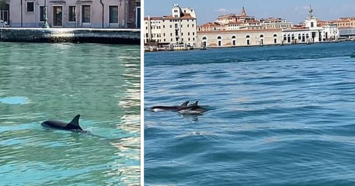 Two Dolphins Swim-up Venice Canal In Exceptionally Rare Sighting