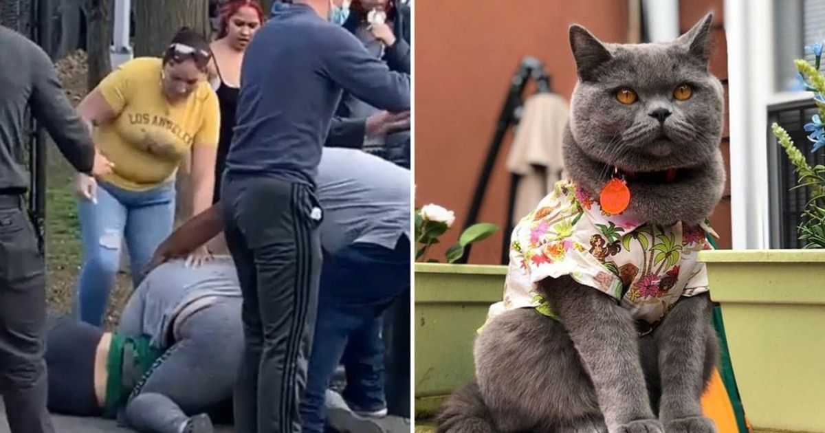 Instagram Cat Star Ponzu Dies Tragically After Boy,12, Yanked Its Leash In Park