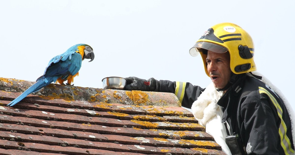 """Foul-Mouthed Parrot Trapped On Roof Keeps Telling Firefighters To """"F**k Off"""""""