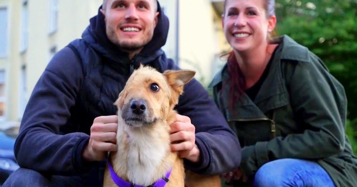 Dog Who Had His Face Cut Off By Cruel Owner Finally Gets To Meet The Family Who Saved His Life