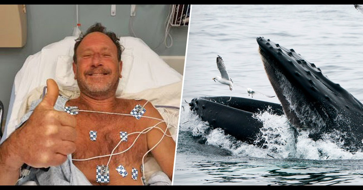 Man Who Survived Plane Crash And Was Swallowed Whole By A Whale Did A Reddit Ama And These Are The Best Answers