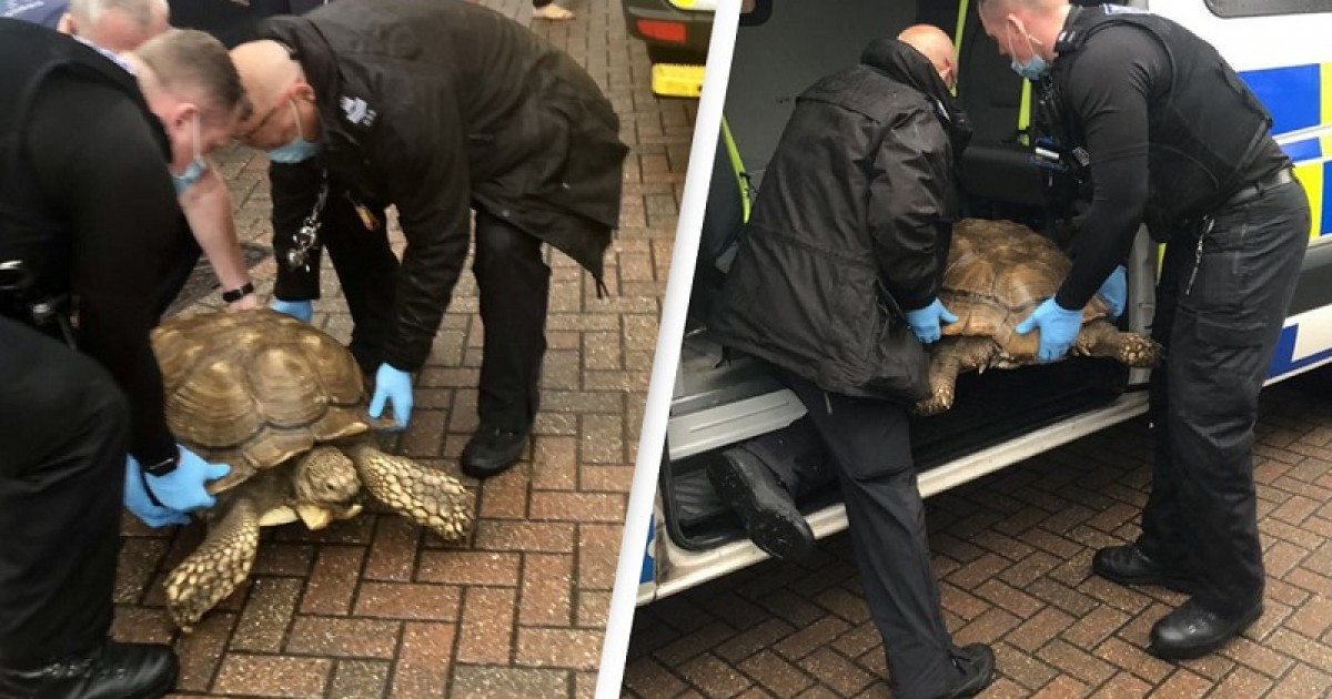 Giant Tortoise, 35, Gets Arrested By Police For Managing To Escape Home Without Breaking The Fence