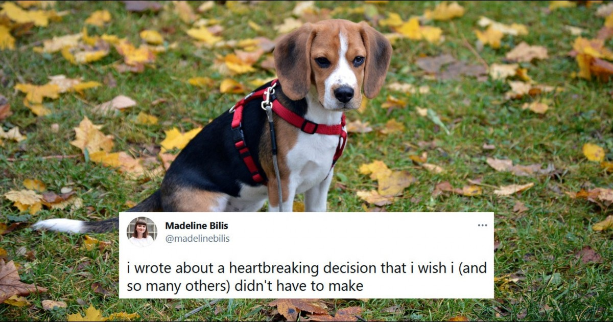 Writer Sparks Outrage After She Reveals She Put Down Her 'pandemic dog'