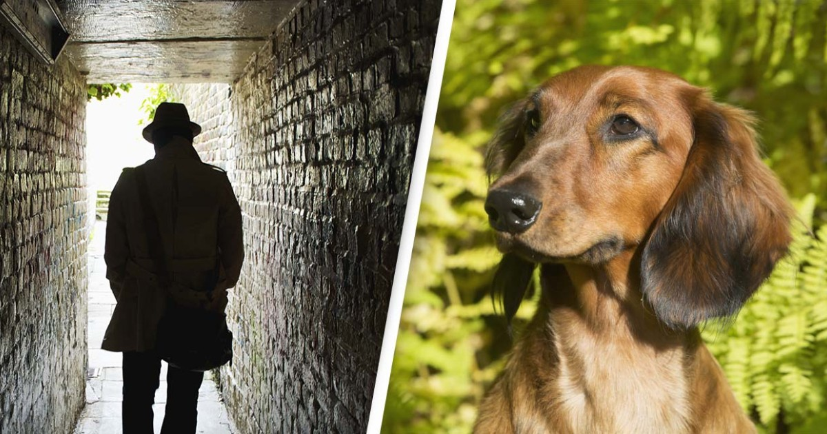 Uk Dog Owners Warned About Thieves Stalking Out Parks And Luring Puppies