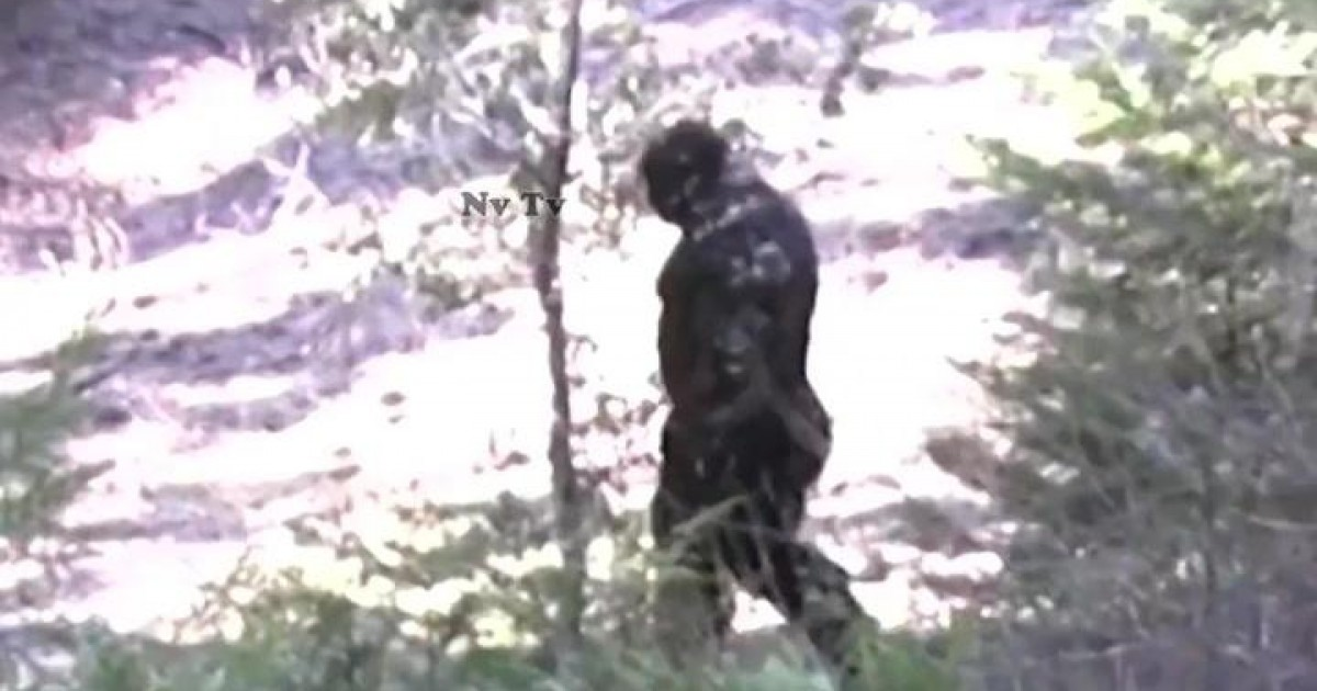 Bizzare Footage Allegedly Reveals Recent Sighting of Bigfoot In Idaho