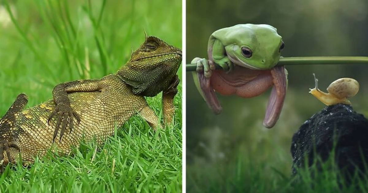21 Stunning Pictures Showing Reptiles Enjoying And Relaxing Under The Sun
